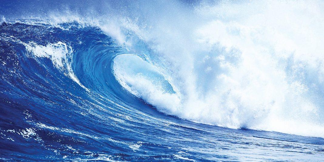 Rinnovabili l europa investe 250 milioni di euro sull - Foto di animali dell oceano ...